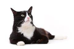 Gato preto e branco bonito que olha acima contra o branco Fotografia de Stock Royalty Free