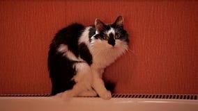 Gato preto e branco bonito que senta-se em uma bateria e em uma lavagem do aquecimento central vídeos de arquivo