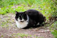 Gato preto e branco com olhos abertos imagem de stock