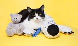 Gato preto e branco com uma foto do estúdio do urso de peluche Imagens de Stock Royalty Free
