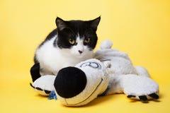 Gato preto e branco com uma foto do estúdio do urso de peluche Fotos de Stock