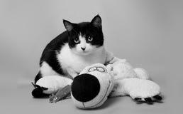 Gato preto e branco com uma imagem do monochrome da foto do estúdio do urso de peluche imagens de stock royalty free
