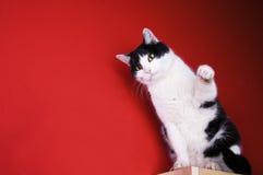 Gato preto e branco de assento Fotografia de Stock Royalty Free
