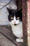 Gato preto e branco do celeiro foto de stock royalty free