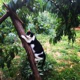 Gato preto e branco em uma árvore Foto de Stock Royalty Free