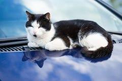 Gato preto e branco na capa do carro Imagem de Stock Royalty Free