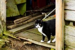 Gato preto e branco na casa velha Fotos de Stock Royalty Free