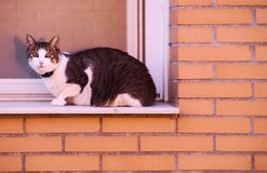 Gato preto e branco na janela na parede de tijolo alaranjada imagem de stock