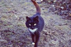 Gato preto e branco na jarda Imagem de Stock Royalty Free
