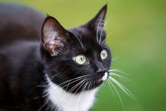 Gato preto e branco no jardim fotos de stock royalty free