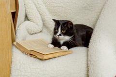Gato preto e branco que dorme em uma cadeira Foto de Stock Royalty Free