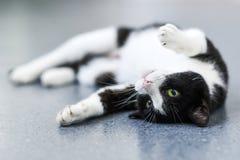 Gato preto e branco que relaxa em casa fotografia de stock royalty free