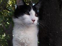 Gato preto e branco sobre uma árvore Fotos de Stock