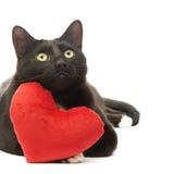 Gato preto e coração vermelho Fotografia de Stock Royalty Free