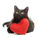 Gato preto e coração vermelho Fotos de Stock Royalty Free