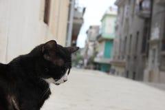 Gato preto em Havana Street idosa em Cuba imagem de stock