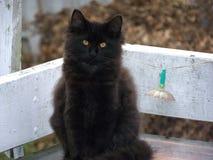 Gato preto em um banco do pátio Foto de Stock