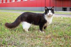 Gato preto em um gramado verde imagem de stock royalty free