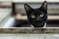 Gato preto em uma janela que olha para baixo Imagens de Stock
