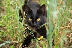 Gato preto engraçado com olhos amarelos fora na grama imagens de stock