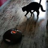 gato preto irritado no aspirador de p30 do robô no assoalho da cozinha foto de stock