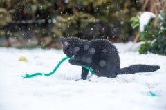 Gato preto na neve imagem de stock