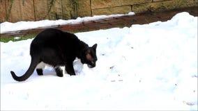 Gato preto na neve vídeos de arquivo
