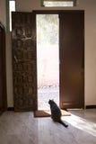 Gato preto na porta Imagens de Stock Royalty Free