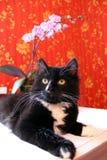 Gato preto na sala com papel de parede vermelho Fotografia de Stock Royalty Free