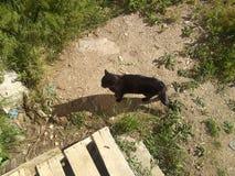 Gato preto na terra desencapada fotografia de stock royalty free