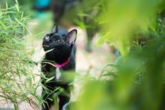 Gato preto no fim do outono acima da foto Foto de Stock