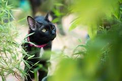 Gato preto no fim do outono acima da foto Fotos de Stock Royalty Free