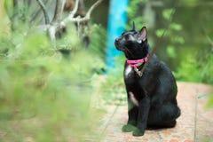 Gato preto no fim do outono acima da foto Fotografia de Stock