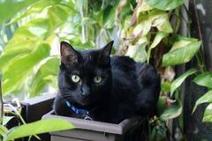 Gato preto no potenciômetro de flor fotografia de stock royalty free