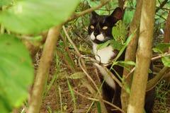 Gato preto nos arbustos do verde no parque Fotos de Stock Royalty Free