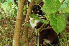 Gato preto nos arbustos do verde no parque Imagem de Stock