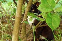 Gato preto nos arbustos do verde no parque Imagens de Stock