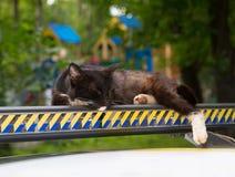 Gato preto novo com os pés brancos adormecidos em uma desmancha prazeres multi-colorida do carro como em um descanso Foto de Stock
