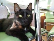 Gato preto novo que senta-se em uma cadeira verde fotos de stock royalty free