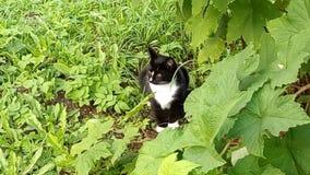 Gato preto para uma caminhada imagens de stock royalty free