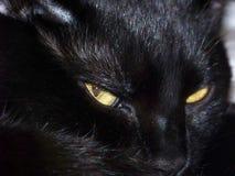 Gato preto perturbado fotografia de stock royalty free