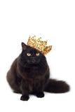 Gato preto que desgasta a coroa dourada isolada Foto de Stock Royalty Free