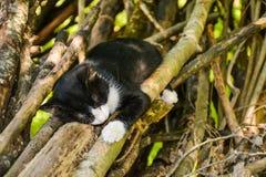 Gato preto que dorme nos ramos de uma árvore foto de stock