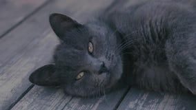 Gato preto vídeos de arquivo