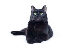 Gato preto que encontra-se no fundo branco Fotografia de Stock Royalty Free