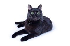 Gato preto que encontra-se no fundo branco Fotos de Stock