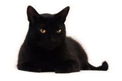 Gato preto que olha o Foto de Stock Royalty Free