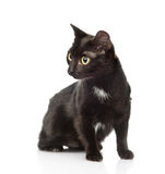 Gato preto que senta-se e que olha afastado Isolado no fundo branco Imagens de Stock Royalty Free
