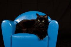 Gato preto que senta-se em uma mini cadeira azul Imagem de Stock
