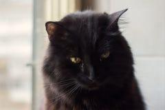 Gato preto que senta-se pela janela Imagens de Stock Royalty Free